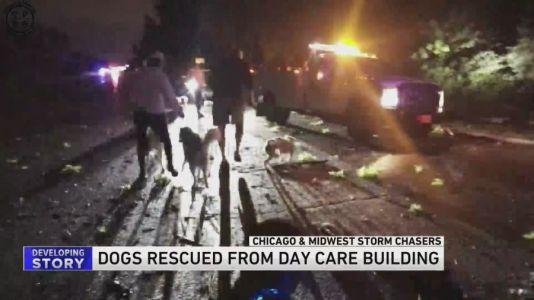 13 dogs rescued from Woodridge daycare after tornado strikes