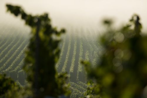 Dom Pérignon's Latest Harvest Looks Beyond Producing the Next Vintage and Adjusts to the Climate Crisis