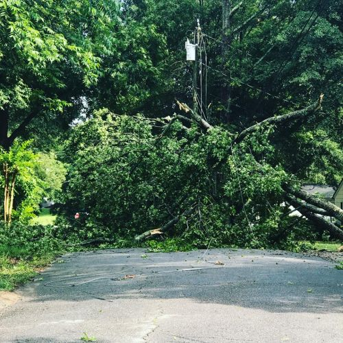 Afternoon storm brings downed trees, flash flooding