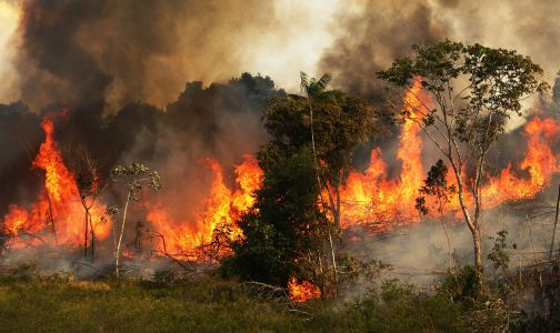 The Amazon is burning at a rate not seen since we started keeping track. The smoke is reaching cities 2,000 miles away