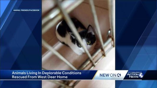 At least 5 dogs and 30 cats found living in deplorable conditions inside home in West Deer Township