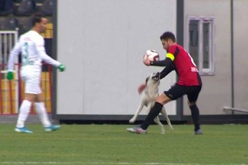 Dog takes over soccer match with the cutest moves