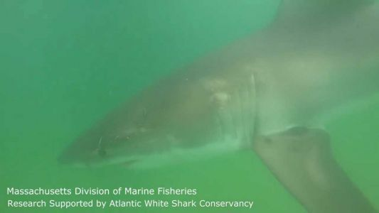 Curious shark gets close-up with underwater camera