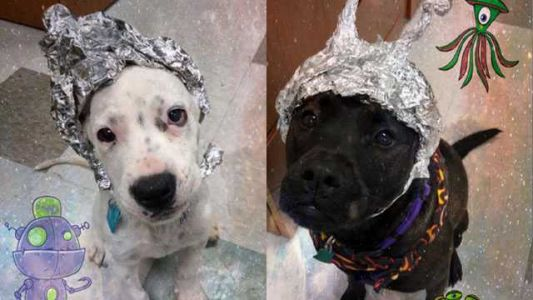 Forget Area 51 - this Oklahoma animal shelter wants you to raid it instead