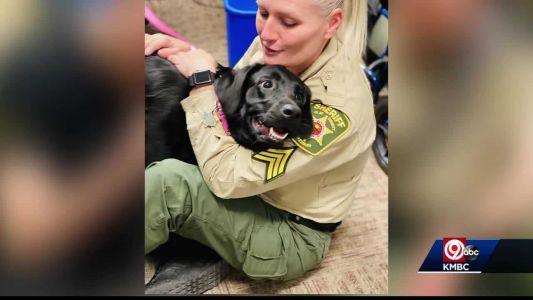 Clay County Sheriff's Office uses service dog to help reduce job stress
