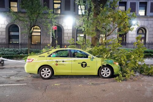 NYPD officer struck by fallen tree branch in East Harlem