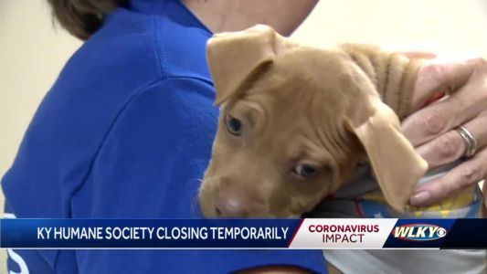 Animals being taken into foster care while Kentucky Humane Society closes to public