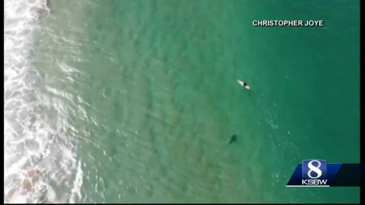 Animal Stories with Dan Green: a shark scare