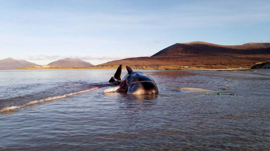 'Everyone's problem': Sperm whale found dead with 220 pounds of trash in its stomach
