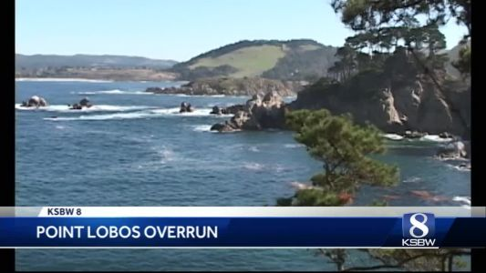 Point Lobos State Park is being loved to death