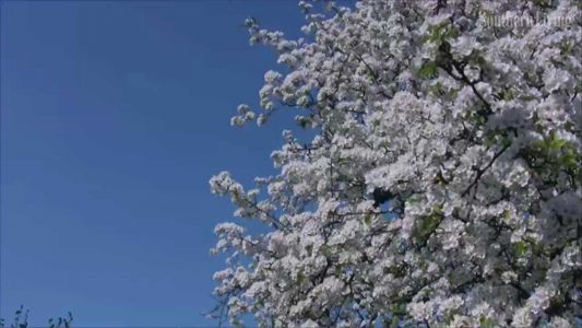 SELFIE REQUIRED: Here's a chance to replace those stinky Bradford pears taking over your yard