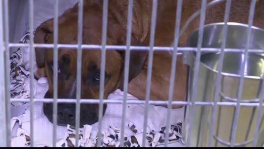 Man on mission to get soft beds to shelter animals
