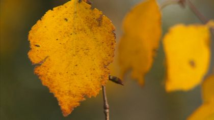 Is It 'Fall' Or 'Autumn'? And How Did The Seasons Get Their Names Anyway?