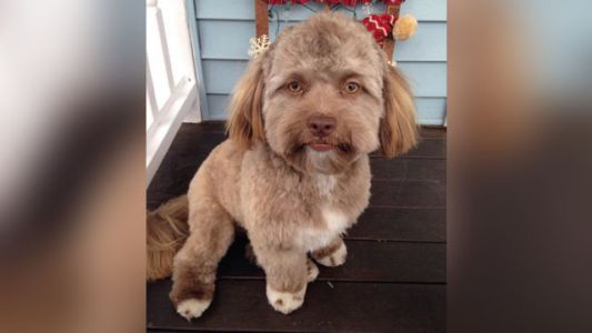Picture of dog with a human-looking face goes viral, freaks everyone out
