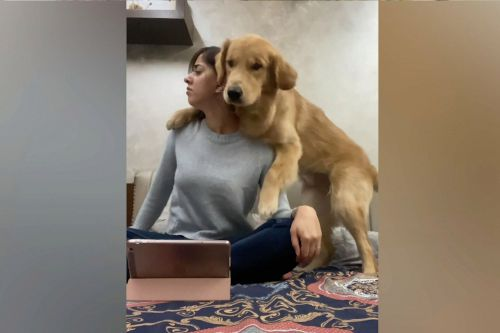 TikTok 'Call Your Dog' challenge stumps golden retriever