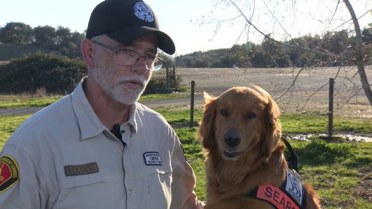 Groot the dog and his handler found couple stranded in California wilderness