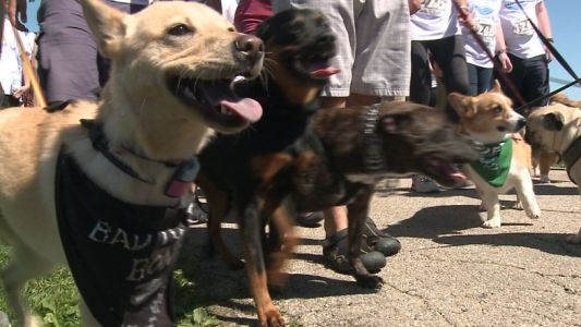 Tails on the Trail: Wisconsin Humane Society hosts annual fundraiser