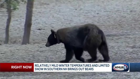 Mild winter, limited snow bring out bears
