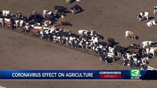 A look at COVID-19's devastating impact on California agricultural industry