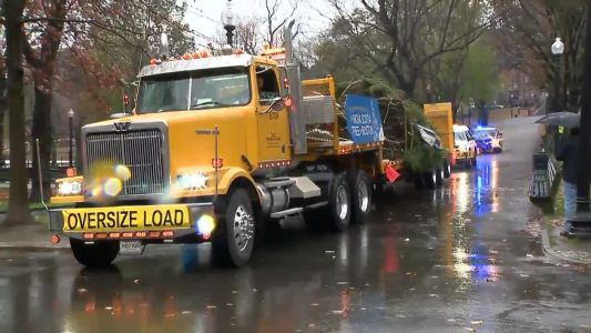 Boston's official Christmas tree arrives