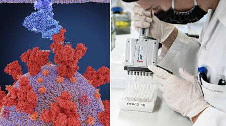British variant of Covid-19 virus not linked to increase in severe disease or death, two studies published in the Lancet claim