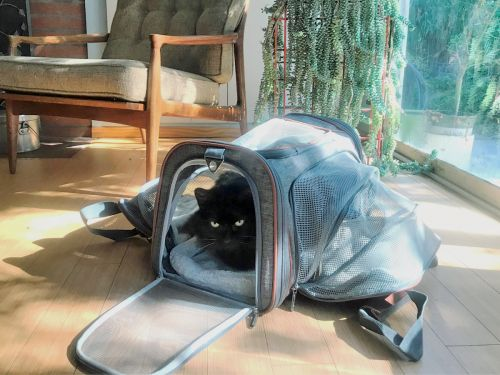This expandable pet carrier is a versatile option for cats and small dogs - it's comfortable and my cat loves it