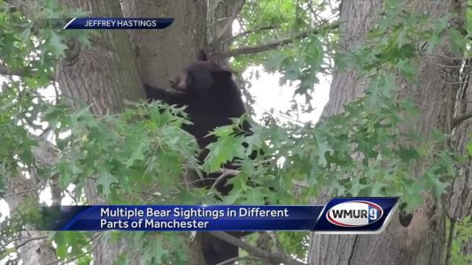 Multiple bear sightings reported in different parts of Manchester