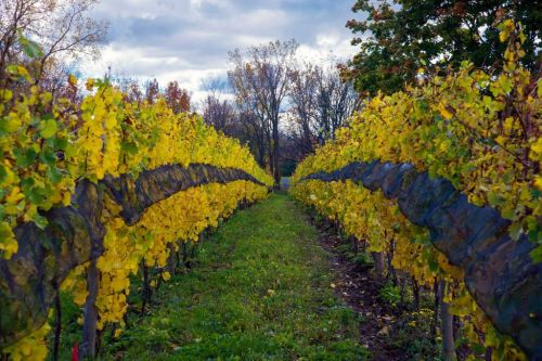 Winemakers in New York's Finger Lakes Region Are Moving Beyond Riesling