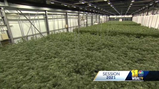 Lawmakers work to legalize marijuana, citing economic, social benefits to state