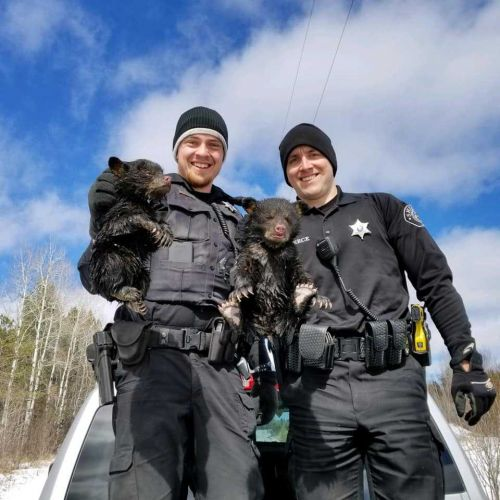 Ashland Co. deputies rescue 2 wailing bear cubs trapped in flooded den