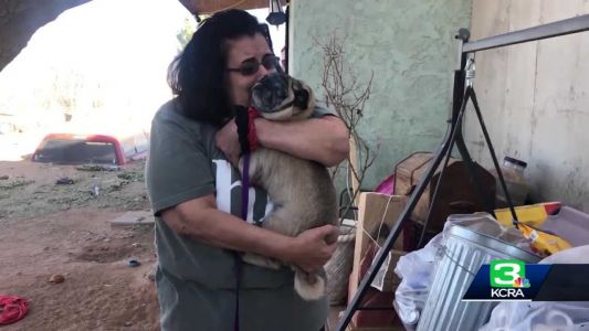 'I never gave up hope': Woman reunited with pug 6 years after he went missing