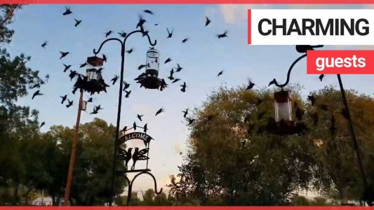 VIDEO: Woman wakes up to hundreds of hummingbirds on her front porch