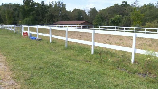 Horse collapses, kills rider in Westmoreland County