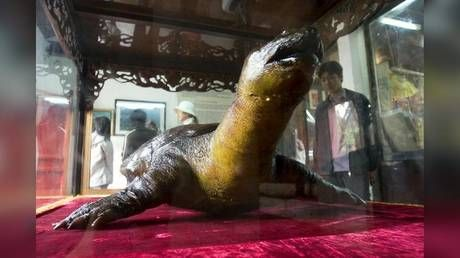 Vietnam enshrines EMBALMED sacred turtle in communist-style mausoleum