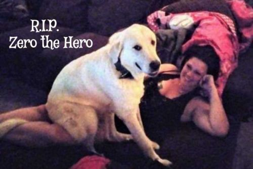 'Zero the hero': Dog killed trying to save family from man who opened fire at birthday party