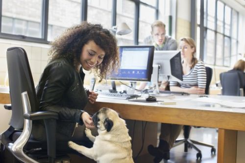 Why Bringing Your Dog to Work Can Be Great for Everyone