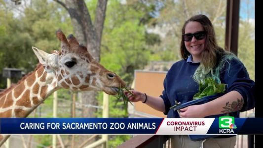 Care continues for Sacramento Zoo animals during COVID-19 crisis