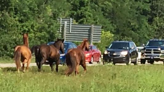 Man arrested after releasing 15 racehorses from Stark County Fairgrounds in Ohio