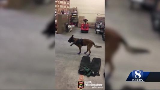 Animal Stories with Dan green: a dog in boots