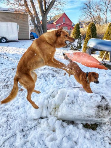Watch these dogs have a blast in the snow