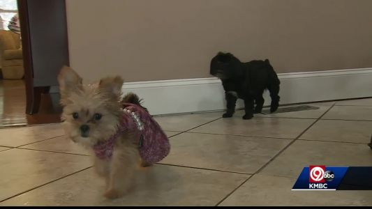 Hotel charges woman hundreds of dollars for dog damage
