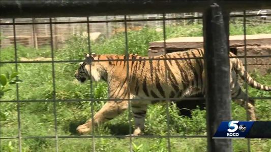 Tiger King: Jeff Lowe not surprised by ruling to grant control of zoo's land to Carole Baskin