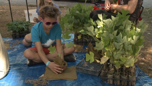 Louisville Classical Academy students hope to help restore urban tree canopy