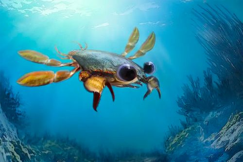 'Utterly bizarre' ancient crab perplexes paleontologists