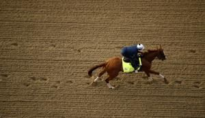 Good Magic, Quip are top challengers to Justify in Preakness