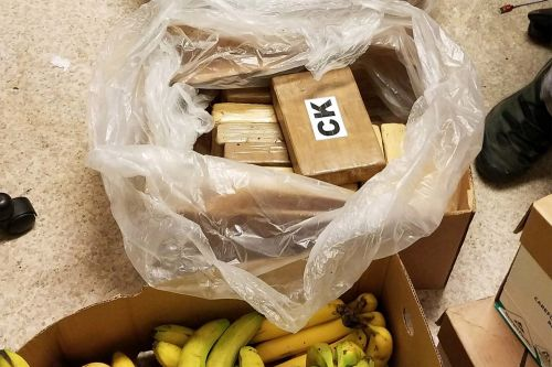 Over $1M worth of cocaine found hidden in banana boxes at Washington Safeway stores