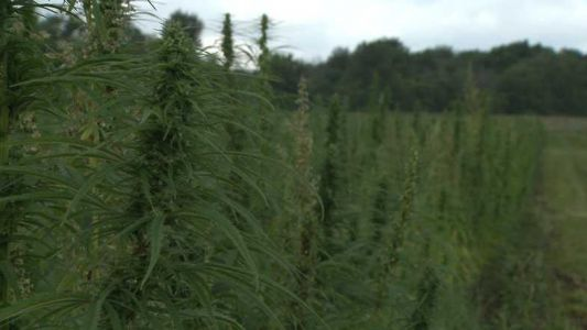 Milwaukee County committee to evaluate Mitchell Park Domes hemp study Monday