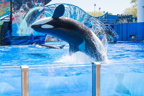 SeaWorld hits back after Virgin Holidays drops park from offerings