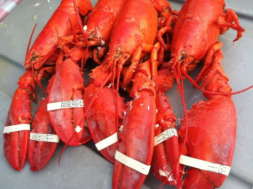 Officials stop Maine restaurant from sedating lobsters with marijuana