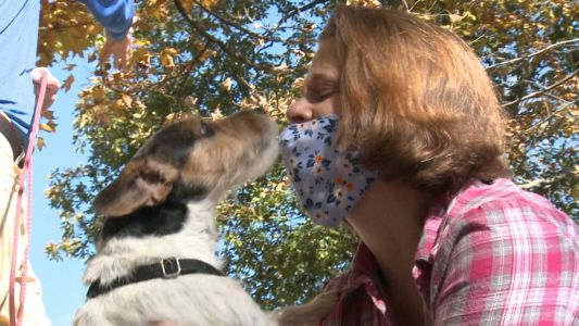 Search dog named Pocket finds woman lost in Bullitt County woods for 48 hours